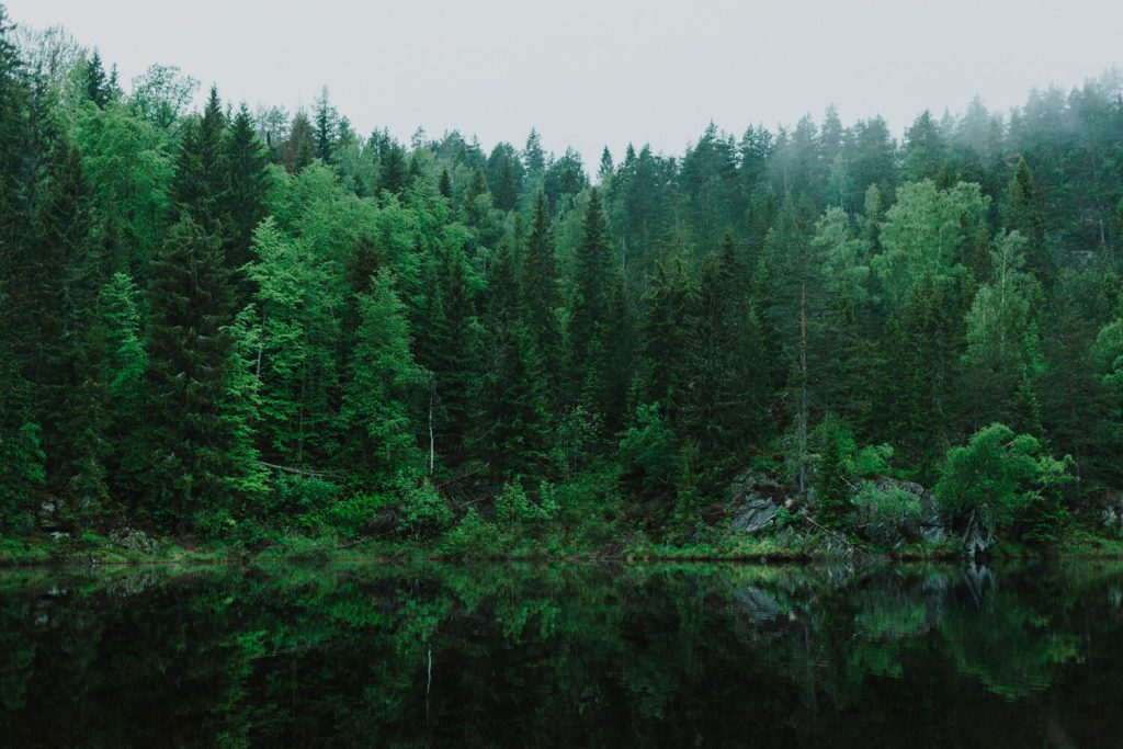 MPS Monitor et PrintReleaf : un partenariat d'une valeur de 31 880 arbres